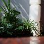 Rośliny do ogrodu wertykalnego