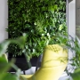 Zielone biuro – po co inwestować w żywe rośliny do biura?