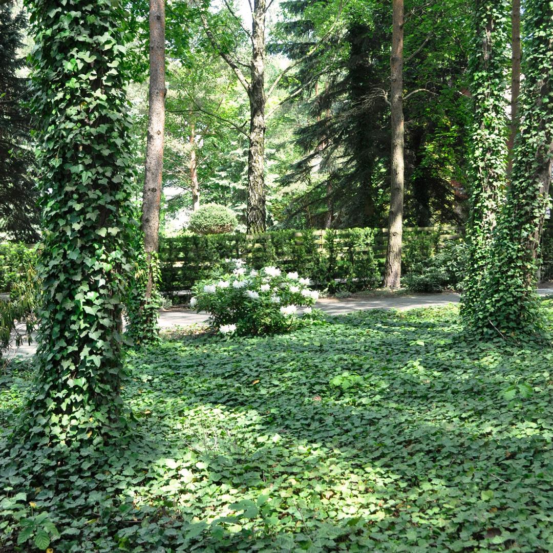 Ogród w Puszczykowie